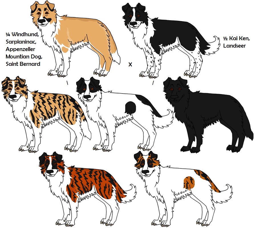 Breed Of Dogs With Sickle Tail Pattern
