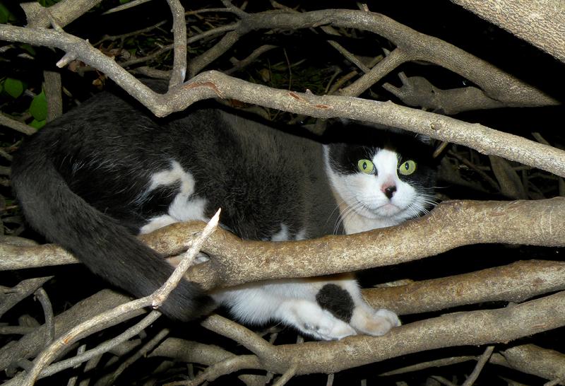 Neighborhood Cat Safari - Z by Leonca
