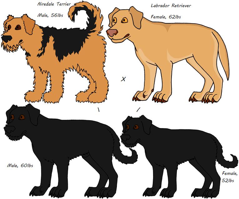 Mixed Breeds-Airedale Terrier, Labrador Retriever by Leonca