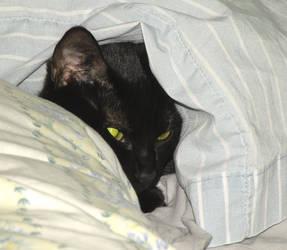 Sour Hiding Face