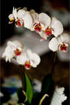 Aliesha's Orchid 2 by AndersonPhotography