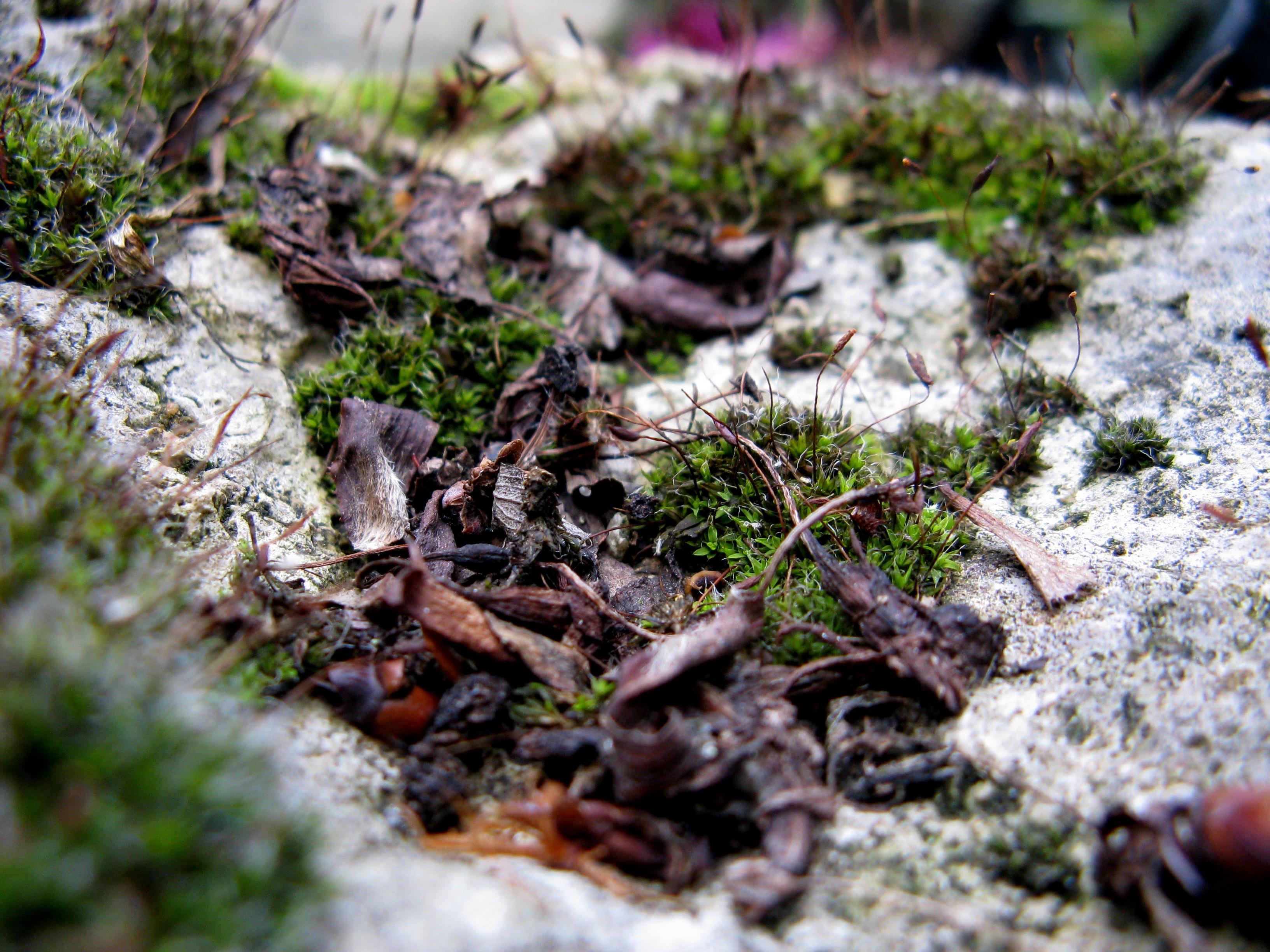 Garten 5 by Fra-Ka