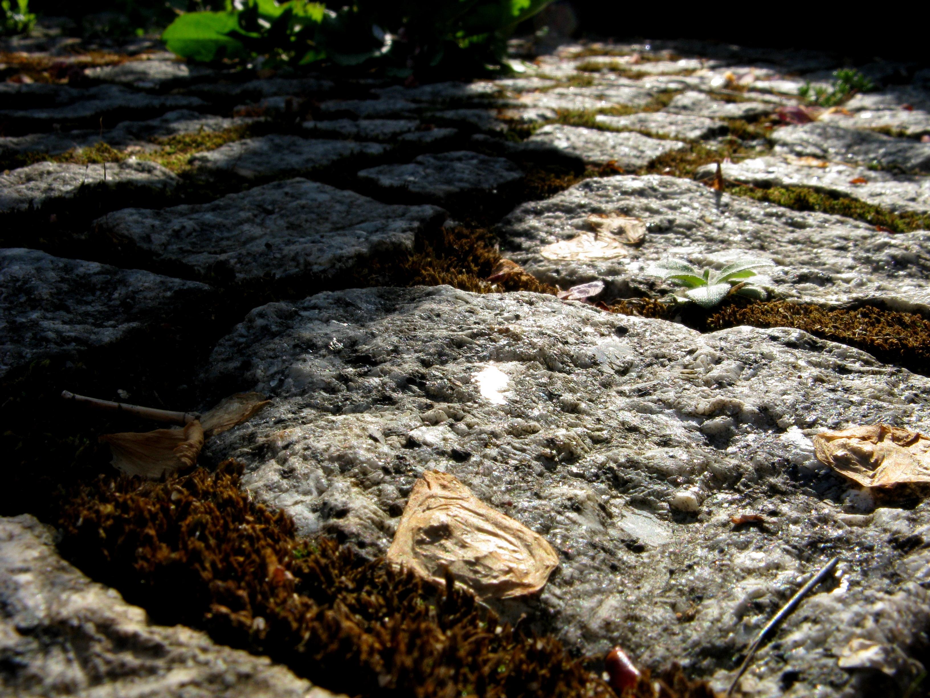 Garten 8 by Fra-Ka