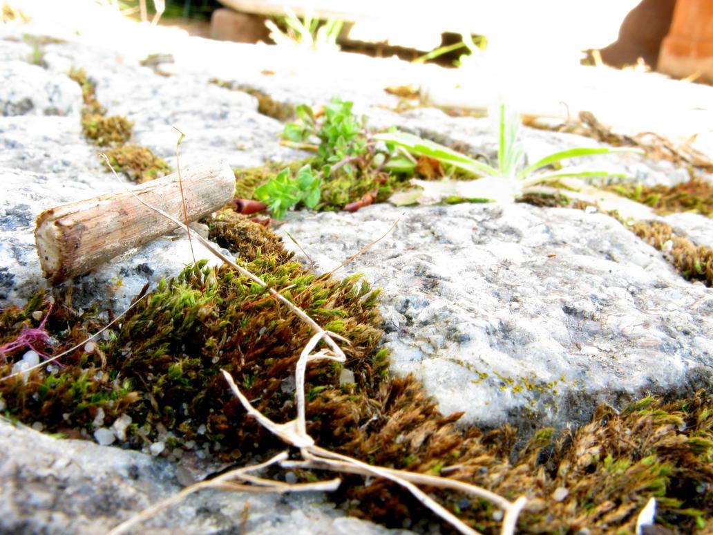 Garten 11 by Fra-Ka