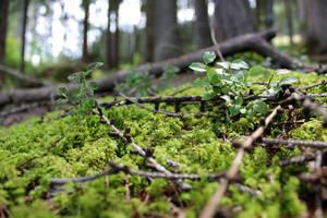 Wald 1 by Fra-Ka