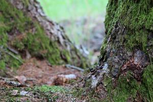 Wald 2 by Fra-Ka