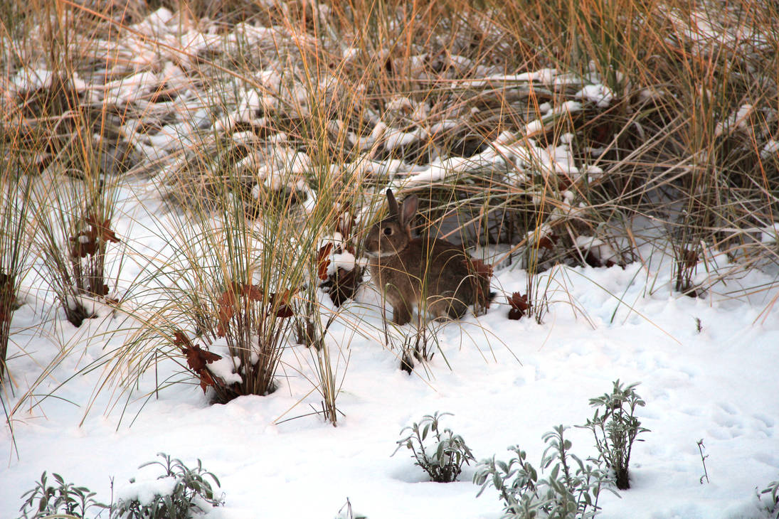 Hasi im Schnee by Fra-Ka