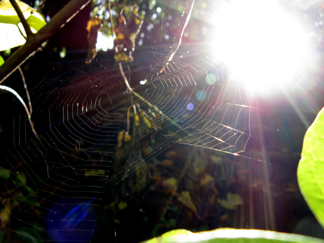Spinnennetz by Fra-Ka