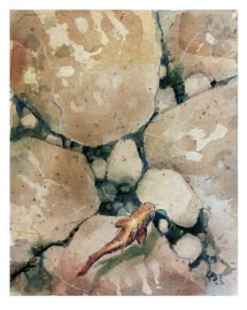 among the rocks...