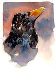 BlackBird by nash8808