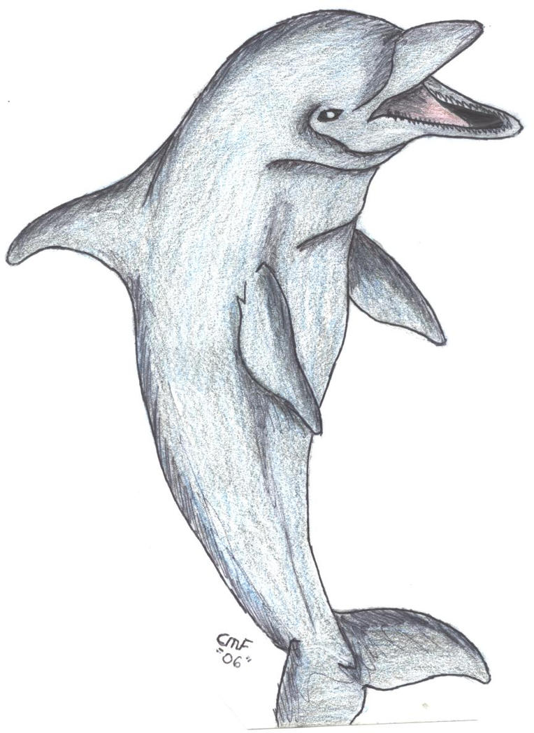 Рисунки дельфина прикольные