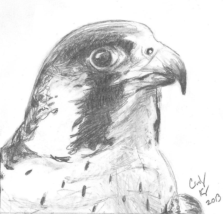 Peregrine Falcon Sketch Peregrine Falcon by