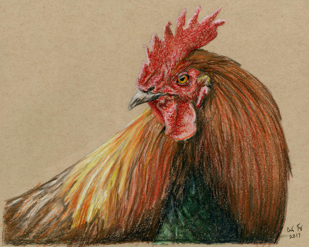 Rooster- Colored Pencil by lost-nomad07