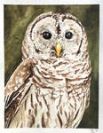 Barred Owl by lost-nomad07