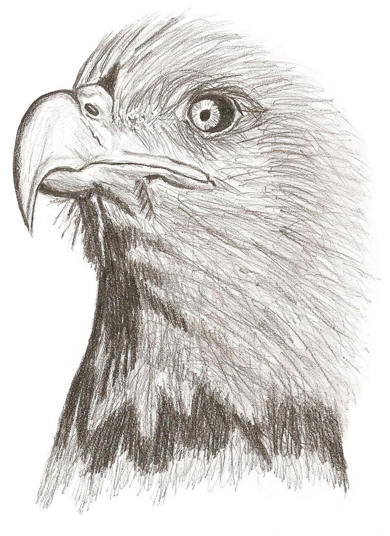 Eagle by crepish