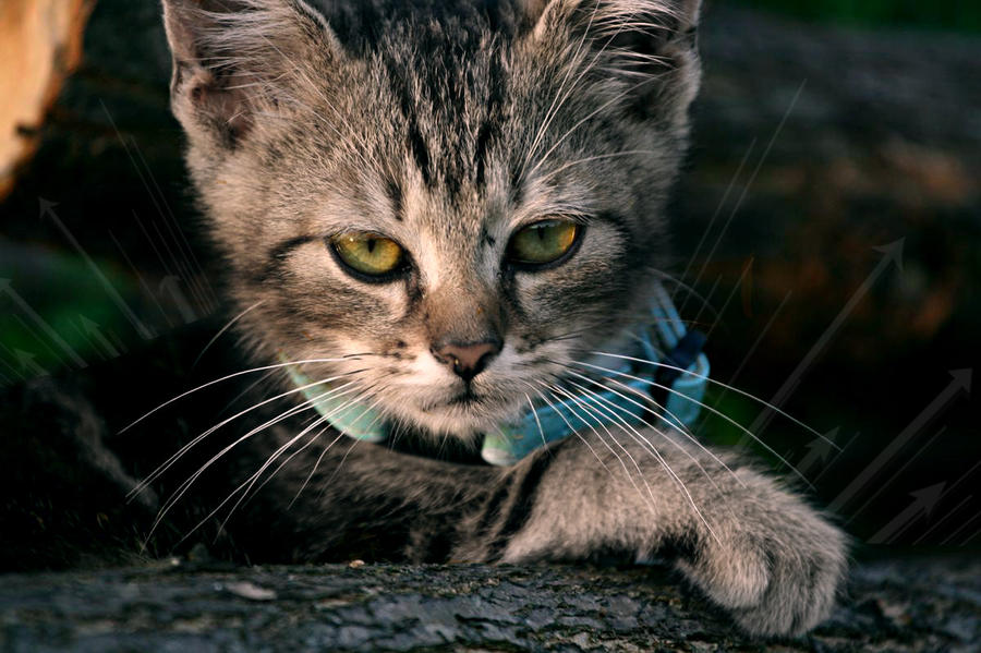 Cat in nature by crepish
