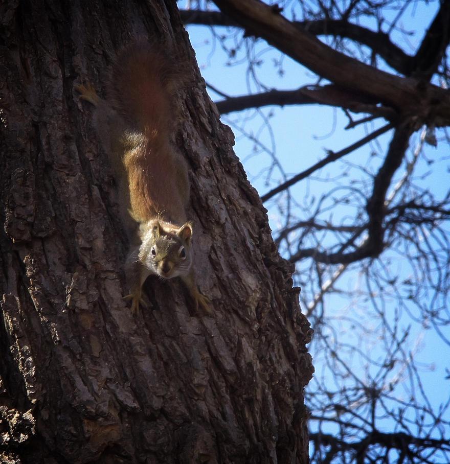 Red Squirrel by AlexMcGilvery