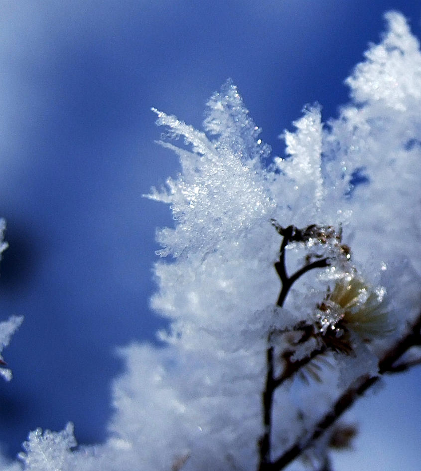 Frost by AlexMcGilvery