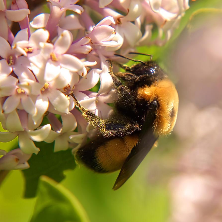 Bee by AlexMcGilvery