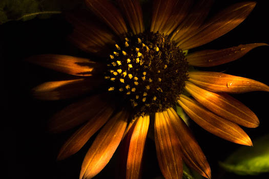 In Darkness the Power of the Sunflower Shines