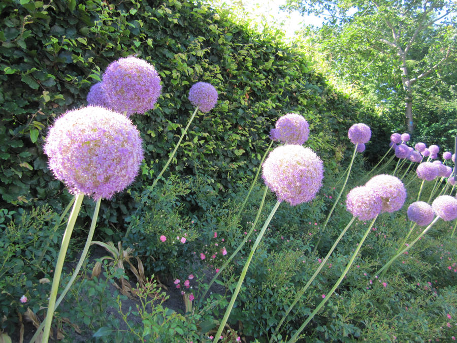 Big round purple flowers by deadcharlie on deviantart big round purple flowers by deadcharlie mightylinksfo Images