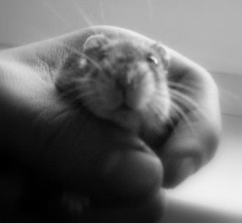 My Hamster BoB