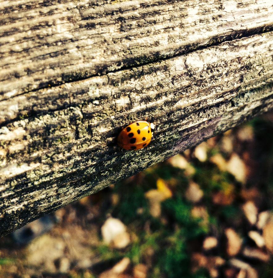 Ladybug by Yani98