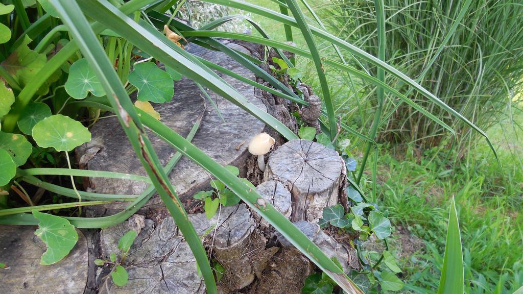 The lone mushroom by lastwinterleaf