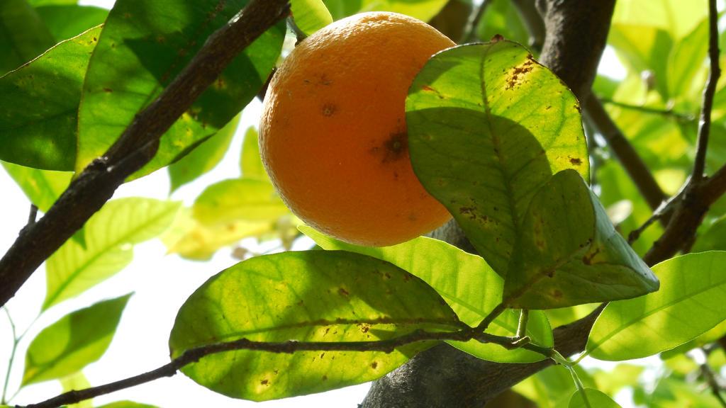 Orange by lastwinterleaf