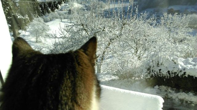 It's cold outside.... by lastwinterleaf