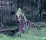 Forest Dream by Ais-H
