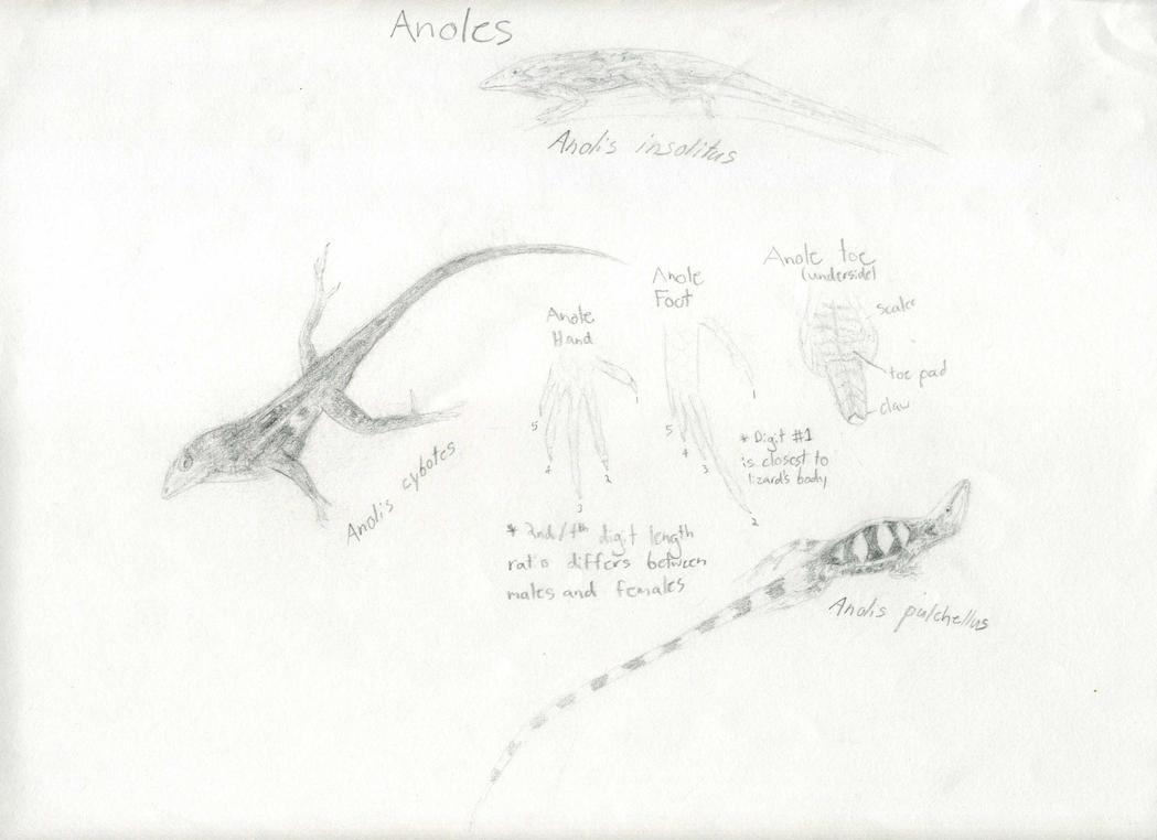 Reptile Vets In West Palm Beach Fl