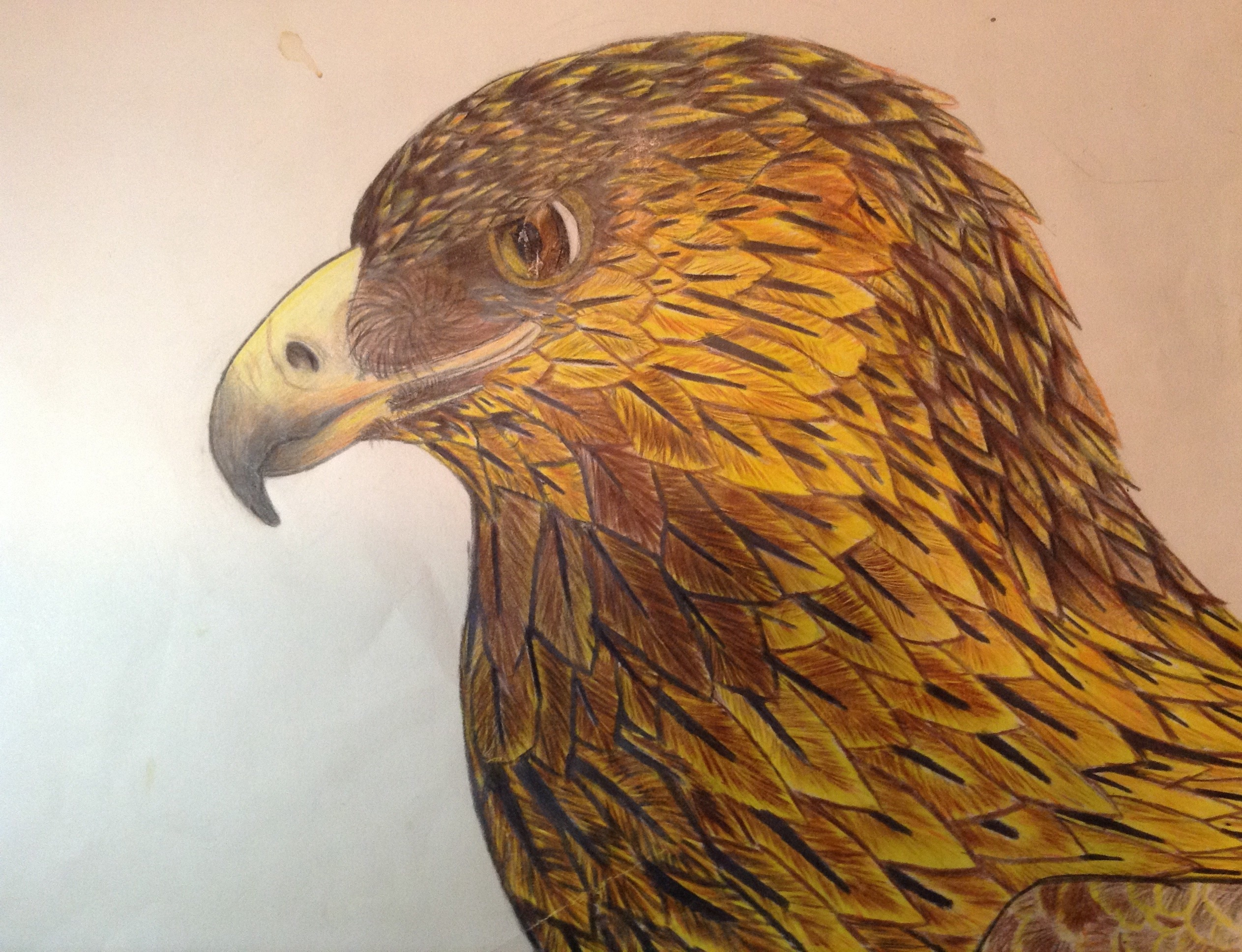 golden eagle colour sketch by icearstorm on deviantart