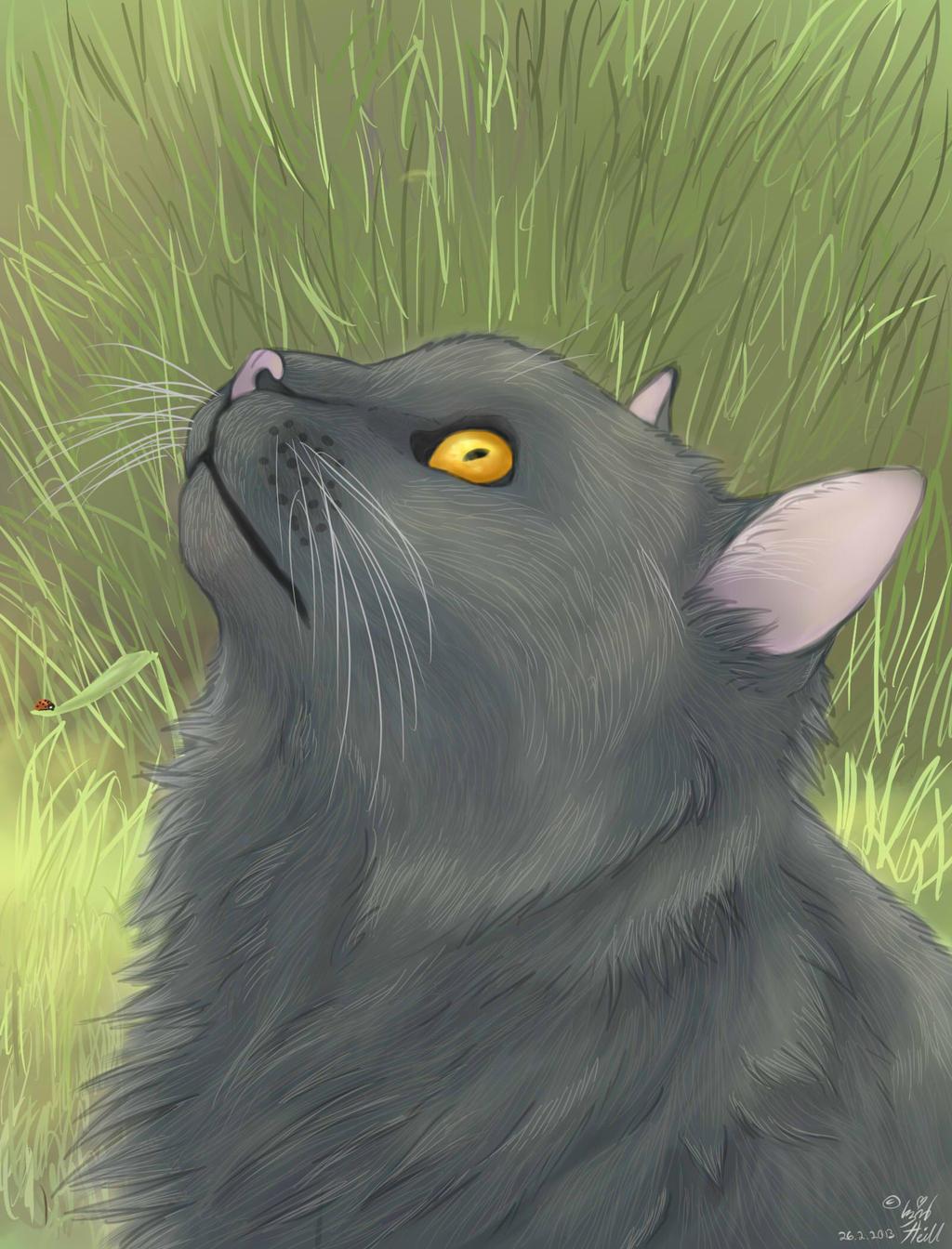 Outside Cat Long-hair By Kyuubi-Doodler On DeviantArt