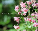Pink garden treasures