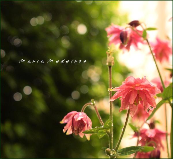 bunga basah air hujan