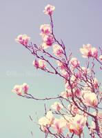 Garden Magnolias by CozyComfyCouch