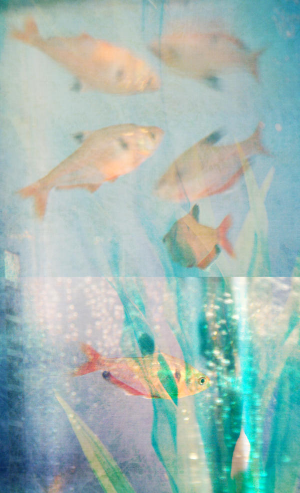 Diptych Fish by CozyComfyCouch