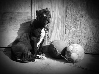 The dog and the balls by madness-lollipop