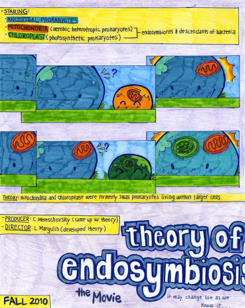 endosymbiosis hypothesis