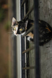 Cat Cat Cat by henster311