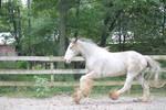 Horse 35