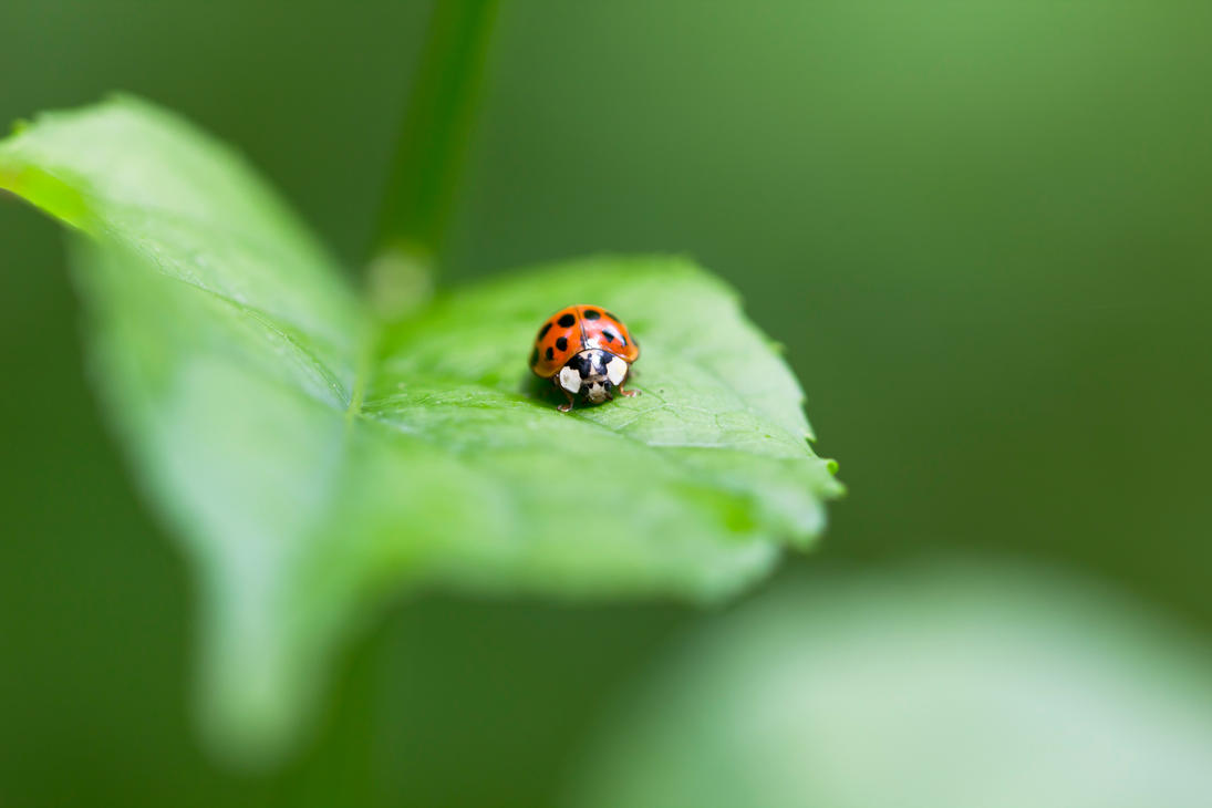 Lady Bug by wax-wing
