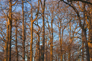 Lots of happy trees