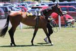 Horse 120