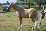 Horse 136