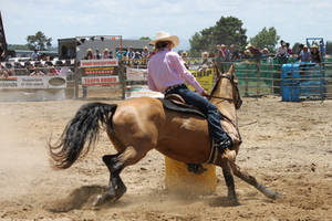 Taupo Rodeo 172