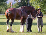 Clydesdale 5