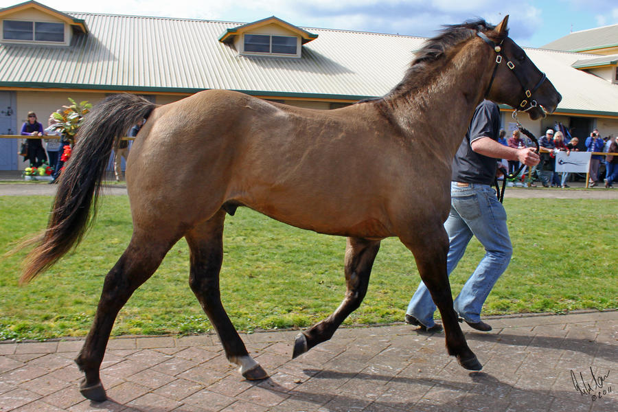 Quarter Horse 2 by Sooty-Bunnie