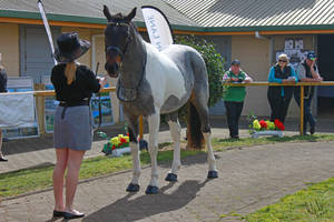 Seal Brown Roan Tobiano by Sooty-Bunnie